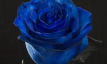 BLUE_MONDIAL